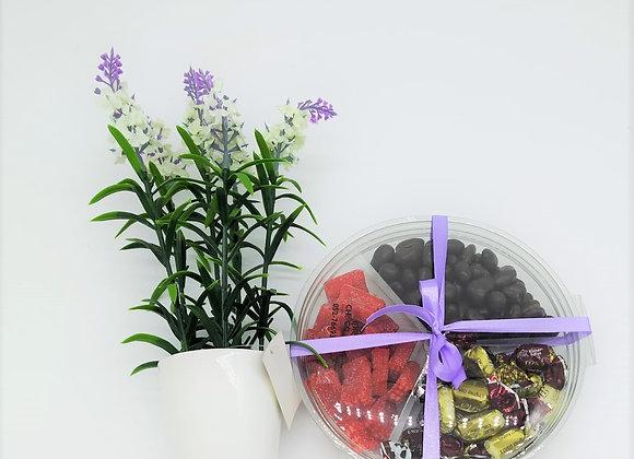 סוכריות או פיצוחים או משוקלדים  פרות יבשים בכלי מחולק עם עציץ