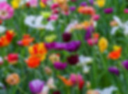 colorful array of flowers.jfif