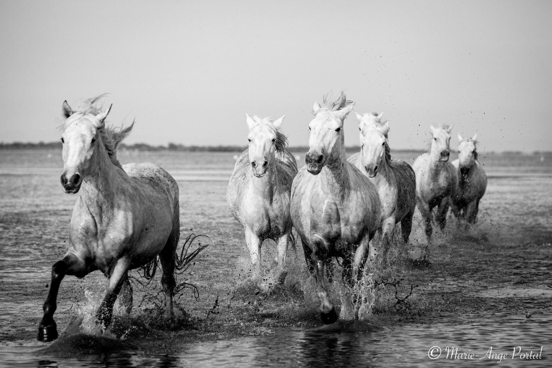 france_serie_camargue_chevaux_nb-2