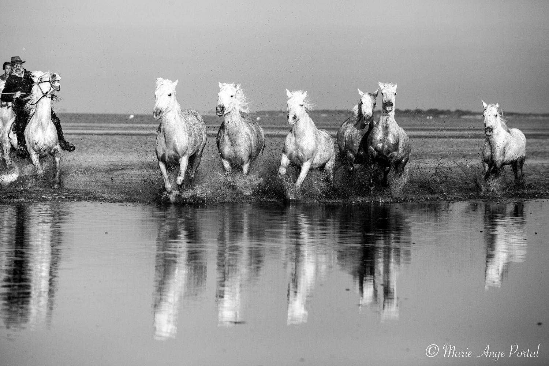 france_serie_camargue_chevaux_nb-3
