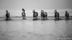 france_serie_camargue_chevaux_nb-5