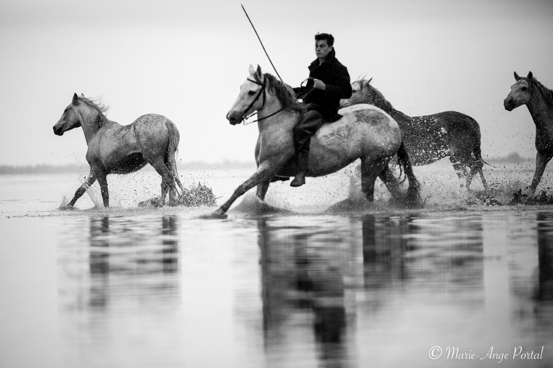 france_serie_camargue_chevaux_nb-7