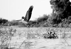 cambodge_photography_tonle_sap-4