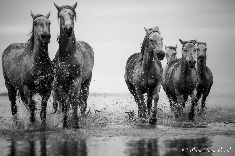 france_serie_camargue_chevaux_nb-6