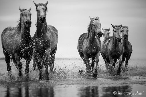 france_serie_camargue_chevaux_nb-6.jpg