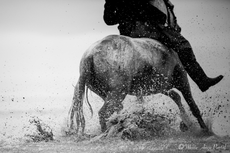 france_serie_camargue_chevaux_nb-9