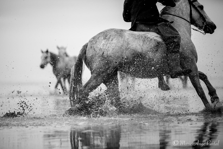 france_serie_camargue_chevaux_nb-8