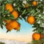 cropped oranges.JPG