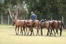 caballos, polo, gauchos, petisero, riendas, montura