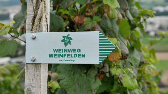 Weinwanderung im Thurgau