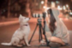 puppy-3688871.jpg