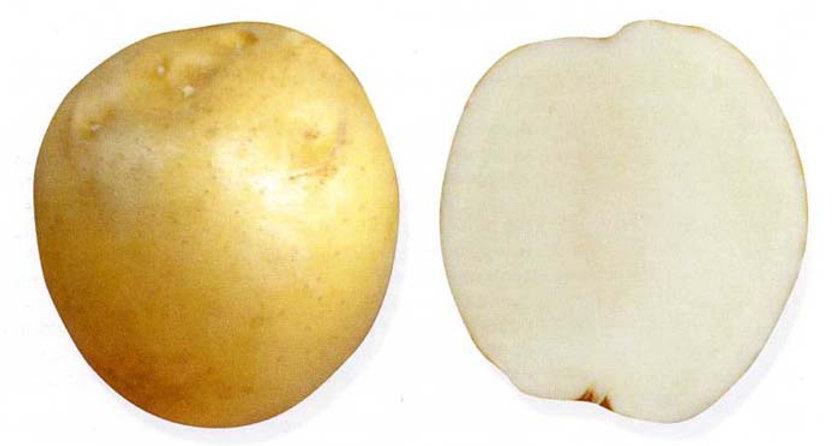 Картофель Ладожский