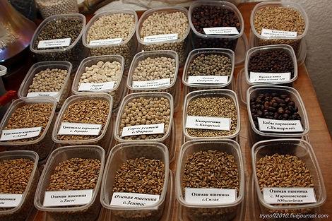 семена, пшеница, горох, соя, люпин, вика, овес, бобы кормовые, третикале
