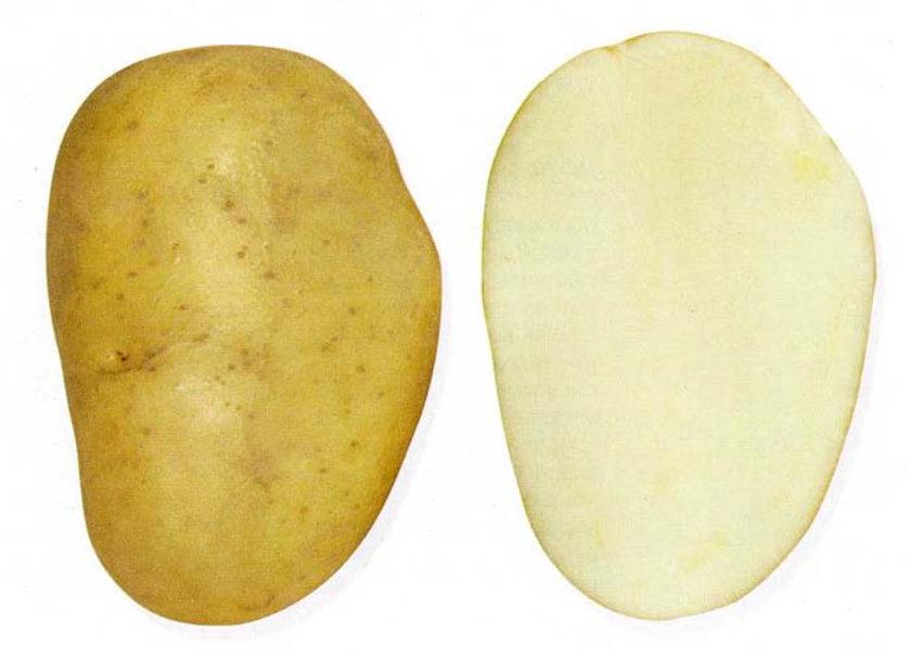 Картофель Лига