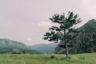 Выездная регистрация Горный Алтай