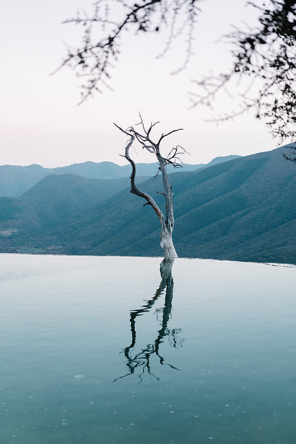 Одинокое сухое дерево Hierve El Agua