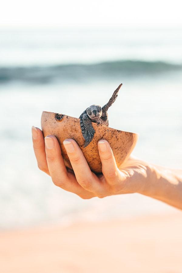 Выпуск черепах в океан в Мексике