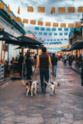 Выгульщик собак в Мексике