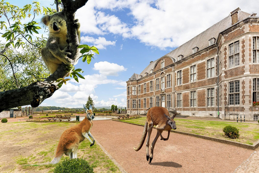 3. kangourou-floreffe.jpg