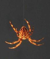 araigné fil.jpg