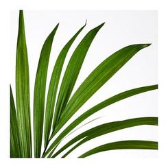 plant_3.jpg