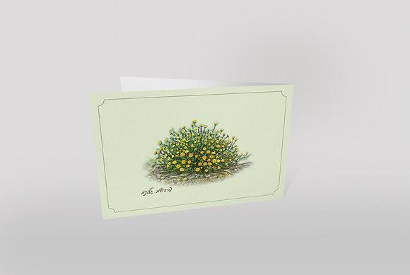 כרטיס ברכה ״תוצרת הערבה״ - פרעושית גלונית
