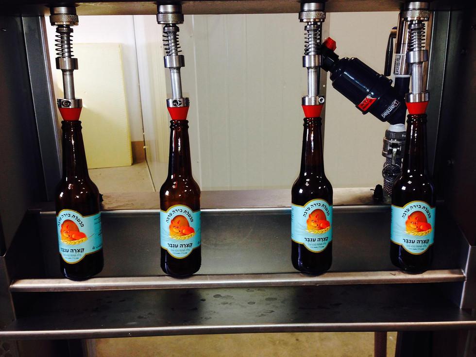 בירה ערבה פס ייצור