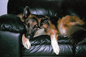 Gunner on couch_edited.jpg