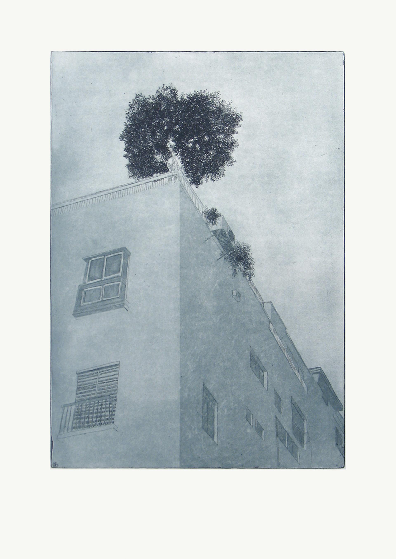 Urban Olive Trees IV - 2012