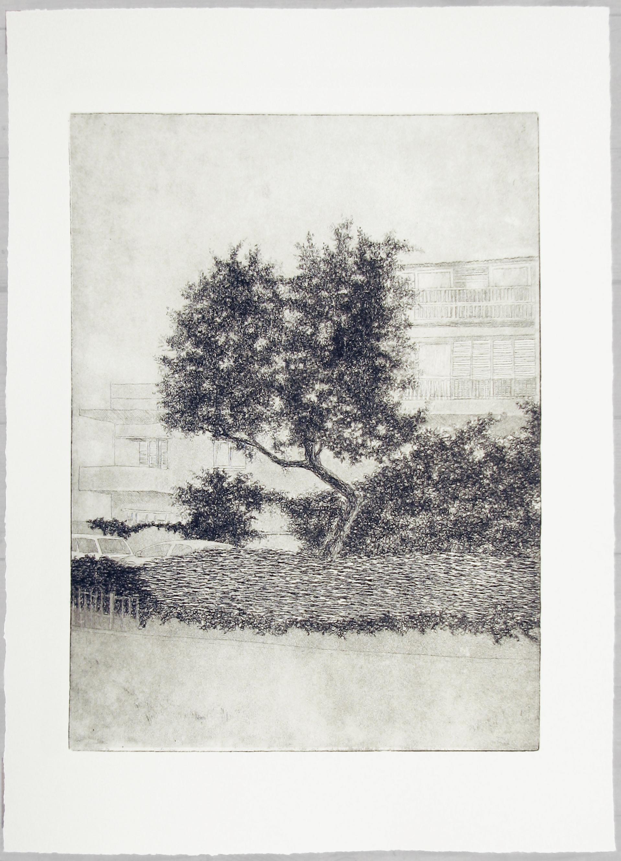 Urban Olive Trees X - 2013