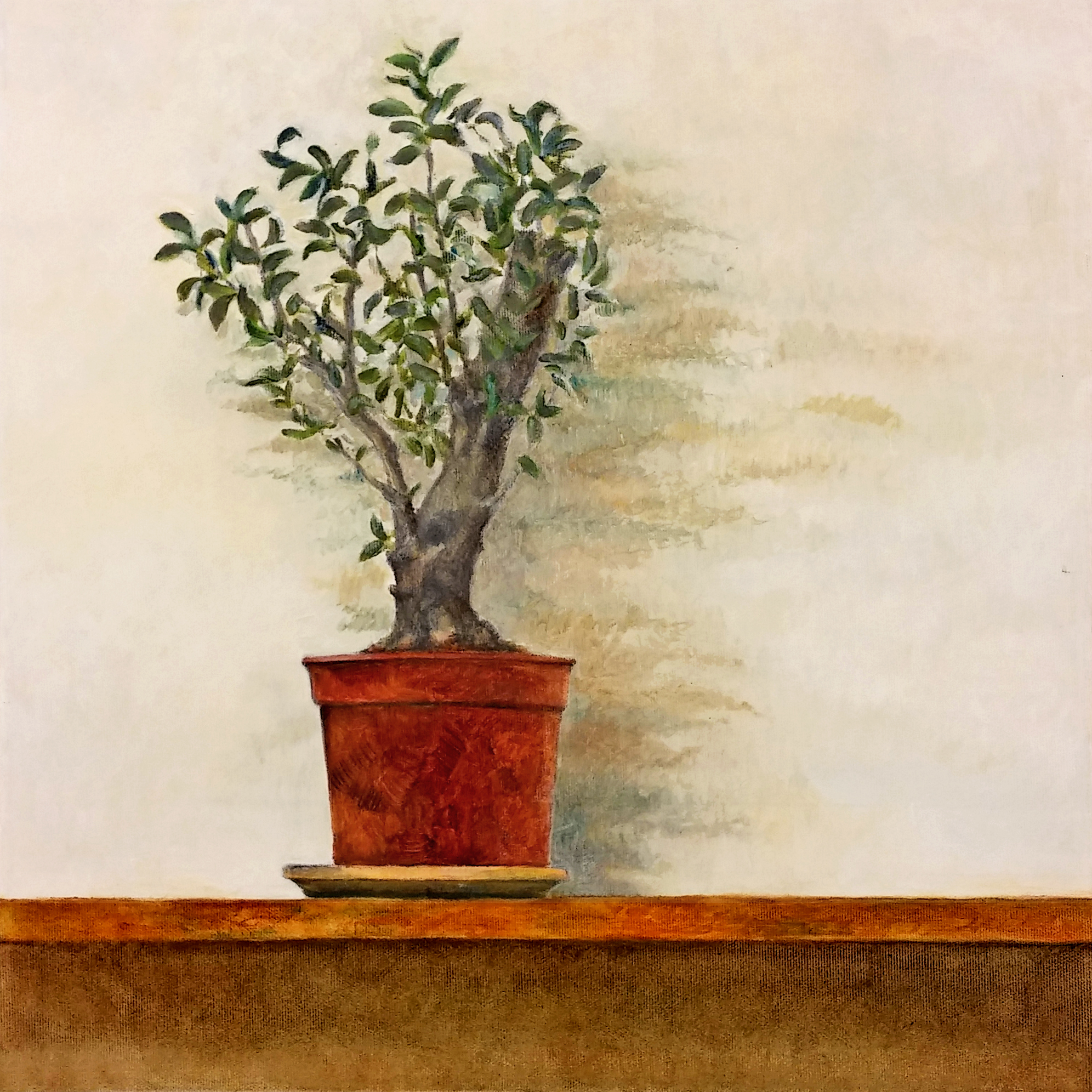 Olive Tree in a Flower Pot - 2016