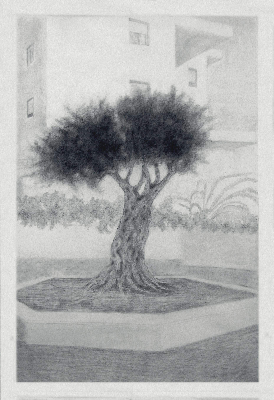 Urban Olive Trees XIV - 2013