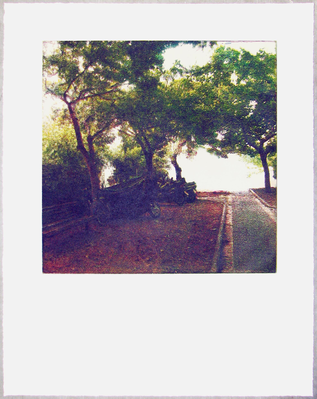 Urban Trees (Lev Alley) - 2009