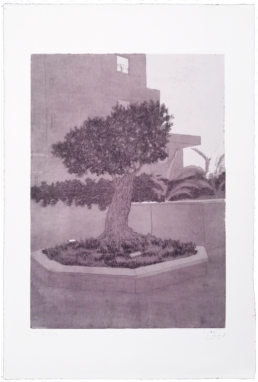 Urban Olive Trees XV - 2014