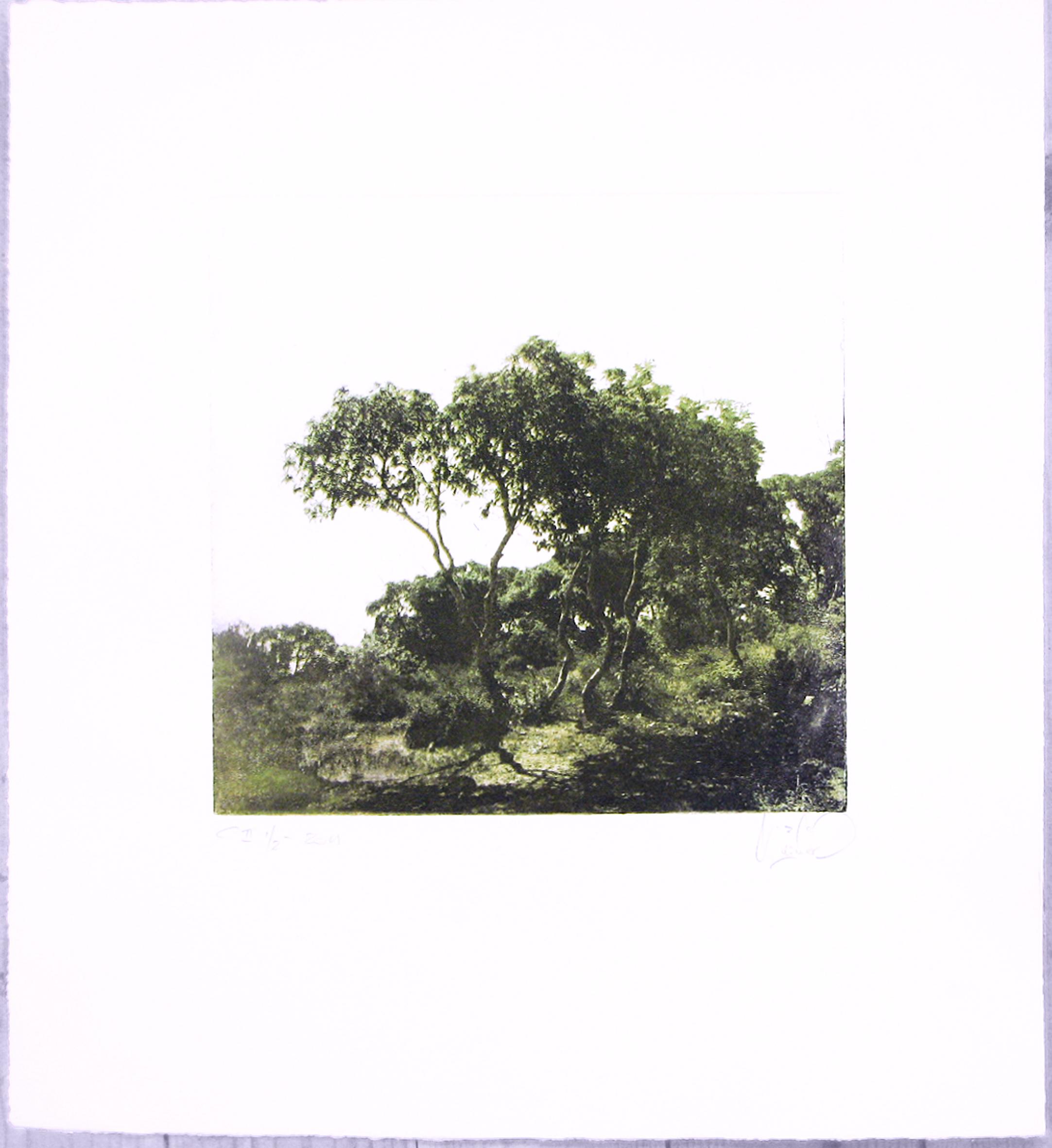 Trees - 2011
