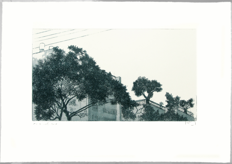 Urban Olive Trees I - 2012