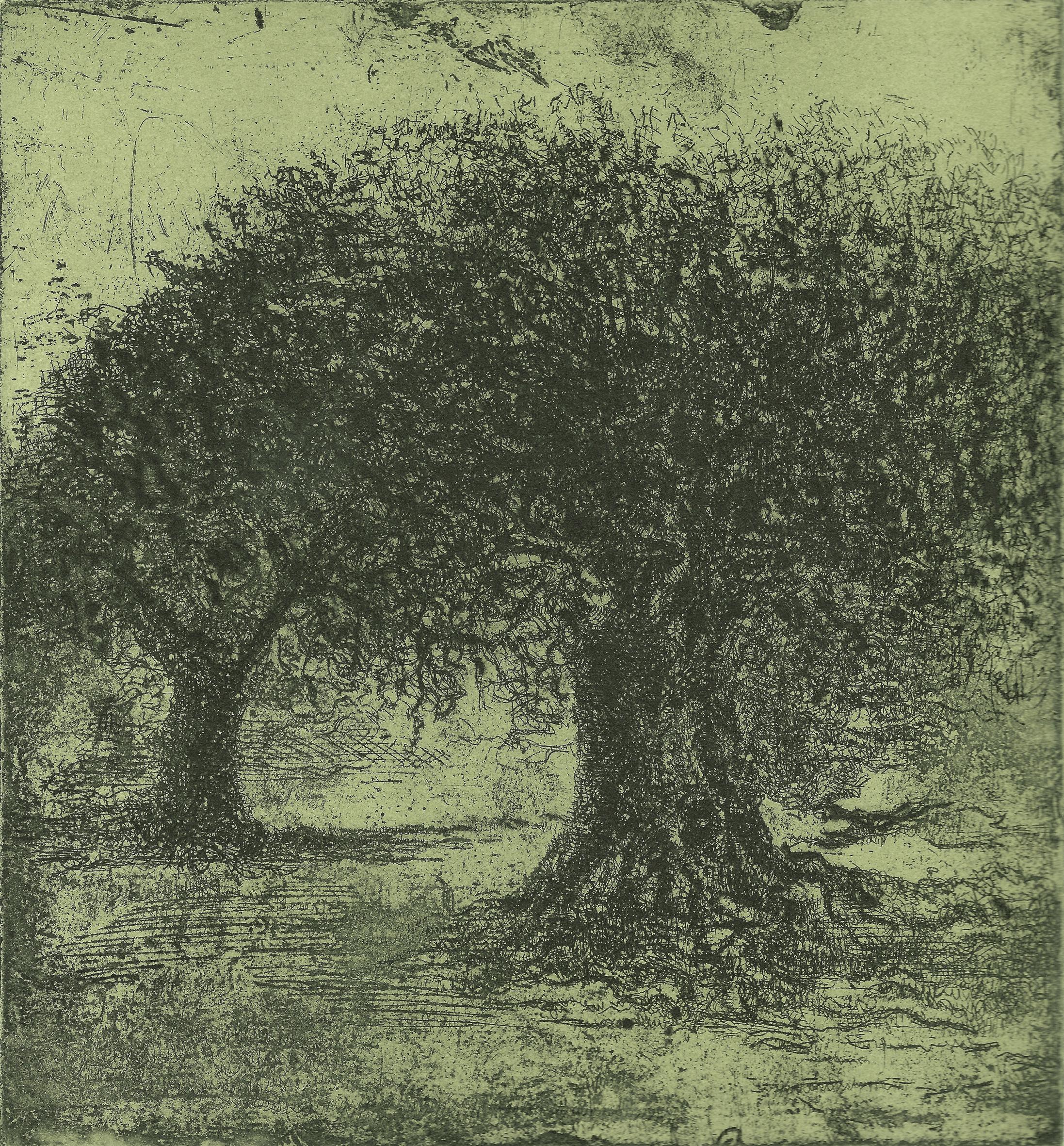 Olive Trees V- 2010