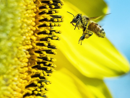Pollination with Purpose