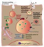 O'Rourke Eyleen C elegans Obesity Aging Lab University of Virginia