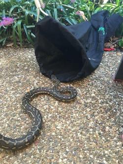 Snake Catcher Worongary