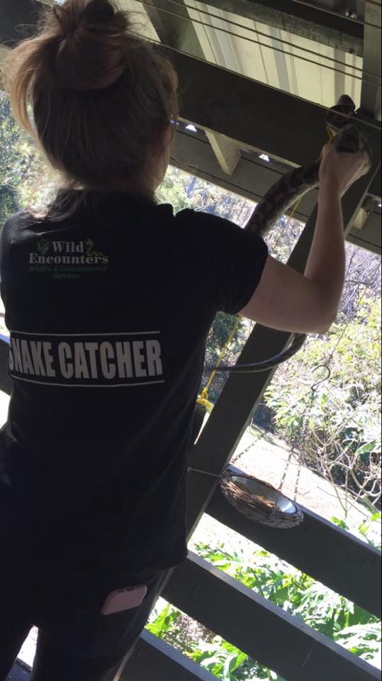 Gold Coast Snake Catcher