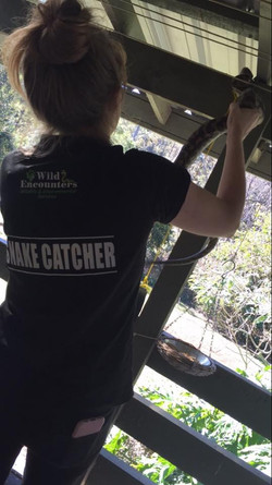 Gold Coast Snake Catcher