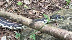 Snake Catcher Coomera