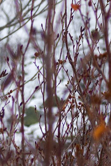 branches2.jpg