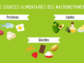Le rôle des macronutriments dans notre alimentation