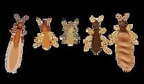 termites-casts-300x176.png