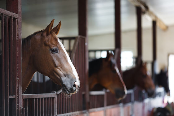 Horses In The Stable.jpg