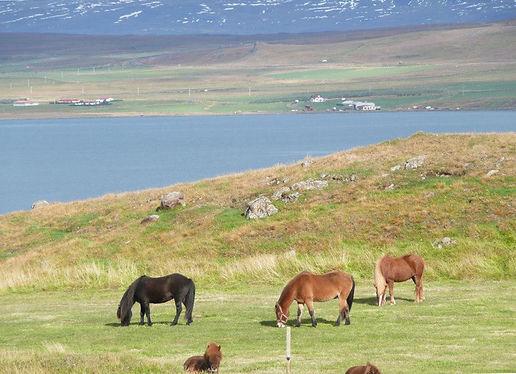 The fertile coastal lands of western Ice