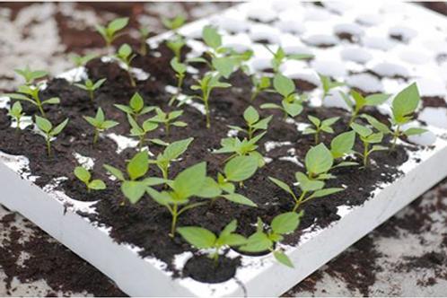 Seedling Tray (84 holes)