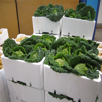 Stackable Veggie Boxes